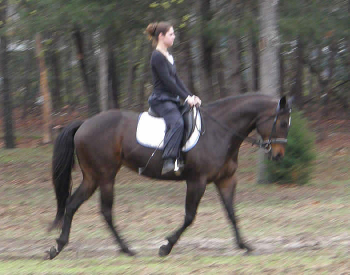Cassie, Breeding Stock Paint and Jessica, Dressage Lesson 2011